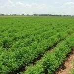 İç Anadolu Bölgesinde Yetişen Tarım Ürünleri