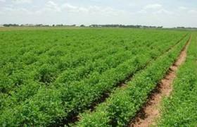 Karadeniz Bölgesinde Yetişen Tarım Ürünleri