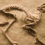 Fosil Nedir? Fosil Ne Demektir? Anlamı