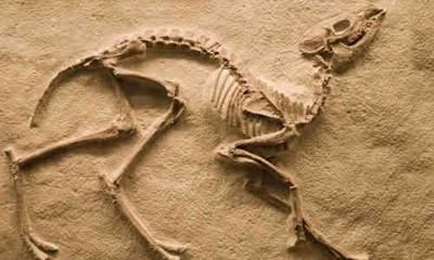 Fosil-Nedir