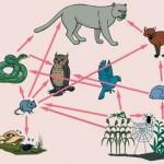 Ekosistem Nedir? Ekosistem Ne Demektir? Anlamı