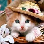 Kedilerin Özellikleri Nelerdir? Kedilerin Vücut Yapıları Nasıldır?