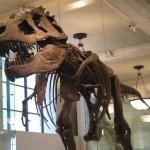 Paleontoloji Nedir? Paleontolojinin Önemi Nedir? Paleontolog Nedir?