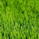 Bitkilere Yeşil Rengi Veren Nedir? Bitkiler Neden Yeşildir?