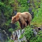 Canlıların Bulunduğu Doğal Ortama Ne Ad Verilir? Habitat Nedir?