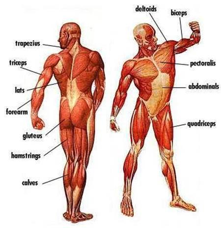 kas hastalıkları