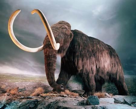 nesli tükenen hayvanlar - mamut