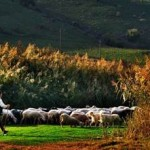 Pastoral Şiir