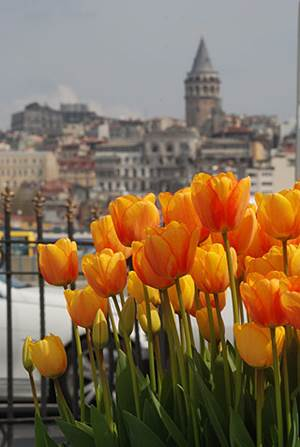 istanbul lale