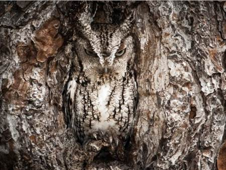 National Geographic Fotoğrafları-8