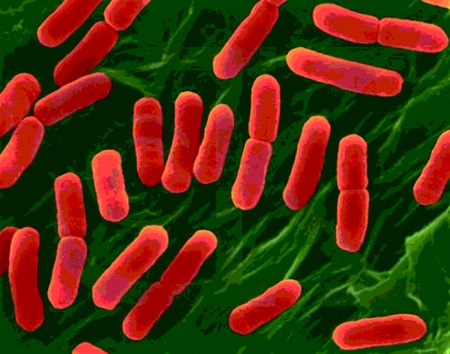 Bakteri nedir