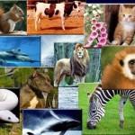 Dünya'nın En İyi Hayvanları