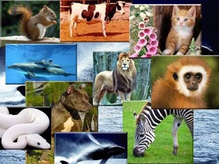 Dünyanın En İyi Hayvanları