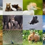 Hayvan Nedir? Hayvanlar Kaça Ayrılır? Omurgalı ve Omurgasız Hayvanlara Örnekler