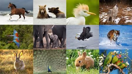 Hayvan Nedir - Omurgalı Omurgasız