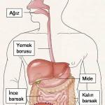 Gastroenteroloji Nedir? Gastroenteroloji Ne Demektir? Anlamı