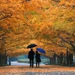 Sonbahar Nedir? Sonbahar Ne Demektir? Anlamı