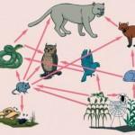 Ekoloji Nedir? Ekoloji Ne Demektir? Anlamı