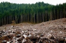 Doğal Kaynak Nedir? Doğal Kaynaklar ve İnsan Faaliyetleri