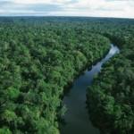 Orman Nedir? Orman Ne Demektir? Anlamı