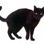 Kara Kedi Geçmesi Uğursuzluk Getirir Mi?
