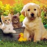 Hayvan Sevgisi İle İlgili Güzel Sözler ve Atasözleri
