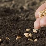 Tohum Nedir? Tohum Ne Demektir? Anlamı