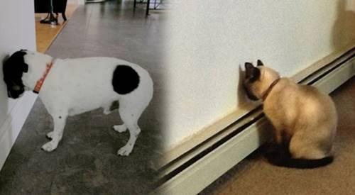 Kediniz yada Köpeğiniz Başını Duvara Dayarsa Dikkatli Olun