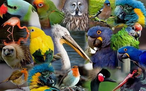 Kuş Türleri Kuş Türleri Isimleri Alfabetik Kuş Türleri Ne