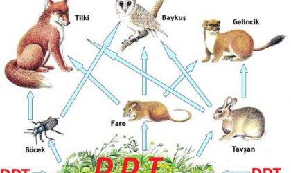 Biyolojik Birikim Nedir? Biyolojik Birikimin Nedenleri