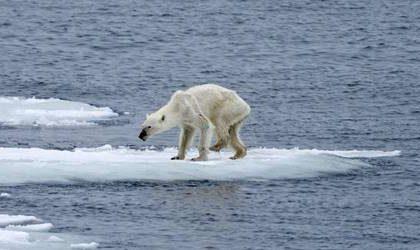 Küresel İklim Değişikliği Nedir? Nedenleri, Sonuçları ve Önlemler