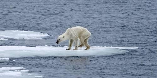 küresel iklim değişikliği sonucu buzullar eriyor