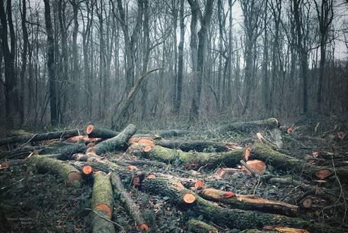 ormanlar yok edildiği için küresel iklim değişikliği oluyor