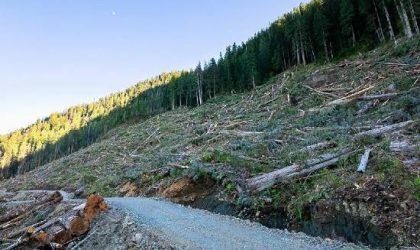 Doğal Yaşam Alanlarının Tahribi ve Orman Yangınları