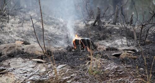orman yangınlarının sonuçları